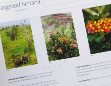 """That is Invasive"": A Plant Catalog"